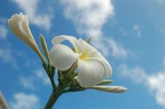 Fleur tropicale en nuages Photographie stock libre de droits