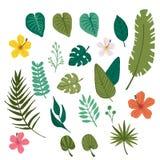 Fleur tropicale et élément tropical de feuille illustration stock