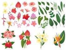 Fleur tropicale Fleurs tropicales de forêt, feuilles exotiques d'usines de tropiques et ensemble fleurissant d'illustration de ve illustration libre de droits