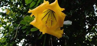 Fleur tropicale jaune images stock