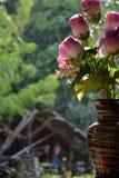 Fleur trouvée en Thaïlande Images stock