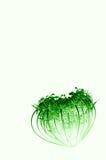 Fleur umbellate en forme de coeur verte Photo libre de droits