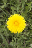 fleur une images libres de droits
