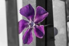 Fleur urbaine Photo libre de droits