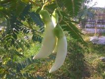 Fleur végétale image stock