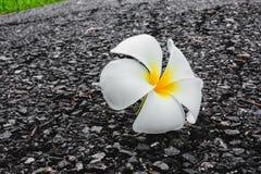 Fleur vers le bas sur le plancher au jardin vert photographie stock libre de droits