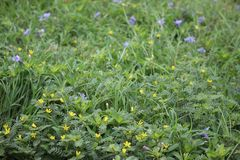 Fleur verte Photographie stock