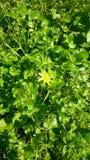 Fleur verte Photo libre de droits