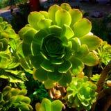 Fleur verte Photographie stock libre de droits