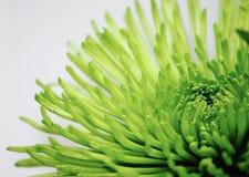 Fleur verte Image libre de droits