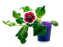 Fleur verte avec la fleur rouge Photographie stock libre de droits