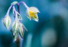 Fleur verte blanche sur le fond bleu images libres de droits