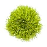 Fleur verte d'oeillet Photographie stock