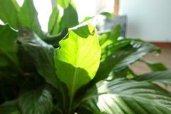Fleur verte dans le bureau photo stock