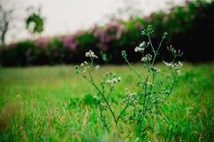 Fleur verte et blanche Images libres de droits