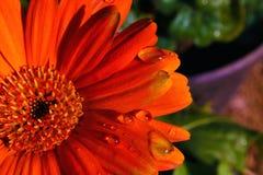 Fleur vibrante Photo stock
