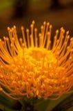 Fleur vibrante Images libres de droits