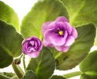Fleur violette Image stock
