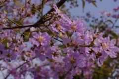 Fleur violette Image libre de droits