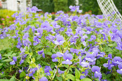 Fleur violette Photographie stock libre de droits