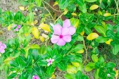 Fleur violette Photos stock
