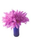 Fleur violette avec des waterdrops Photographie stock