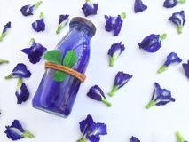 Fleur violette, boisson chaude de Pea Herbal de papillon images libres de droits