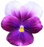 Violet Photos libres de droits