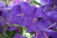 Fleur violette d'orchidée Photo stock