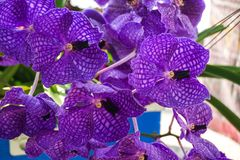 Fleur violette d'orchidée Image libre de droits