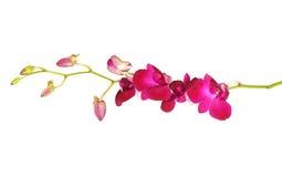 Fleur violette d'orchidées Photo libre de droits