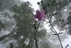 Fleur violette dans la brume Photographie stock libre de droits