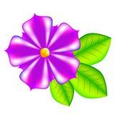 Fleur violette de vecteur avec des feuilles Photographie stock