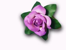 Fleur violette gentille de couleur sur le fond blanc Photo stock