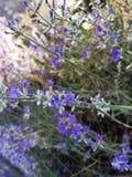 Fleur, violette, herbe, vert, flower& x27 ; s photo libre de droits