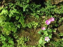 Fleur violette sur la terre Photo libre de droits