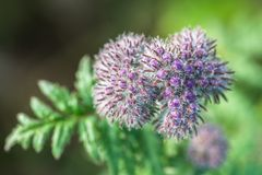 Fleur violette sur un pré Photo stock
