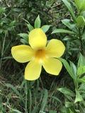 Fleur vivante Photo stock