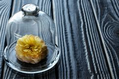 Fleur vivante sous le chapeau en verre Images stock