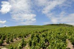 fleurie winnica krajobrazowy pobliski Fotografia Stock