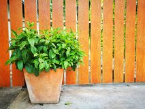 Fleurissez aux usines mises en pot sur le mur en bois Photos stock