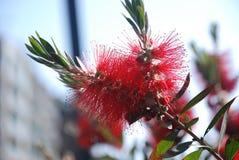 Fleurissez dans l'aune de ¼ du parc GÃ, Barcelone Photographie stock libre de droits