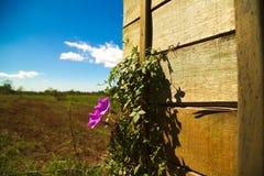 Fleurissez dans le côté de pays sur le bois Images stock