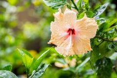 Fleurissez dans le jardin un jour pluvieux Photo stock