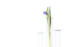 Fleurissez dans un tube à essai d'isolement sur le blanc Photos stock