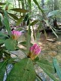 Fleurissez l'écoulement d'arbres de roches de poissons d'espace libre de montagne de crique de rivière de l'eau frais images libres de droits