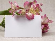 Fleurissez l'Alstroemeria blanc Photos stock