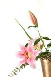 Fleurissez l'arangment Photographie stock libre de droits