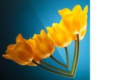 Fleurissez la carte d'amour faite de belles tulipes jaunes Images stock