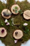 Fleurissez la décoration Photos libres de droits